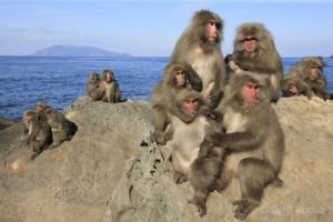 La théorie dite « du 100ème singe »