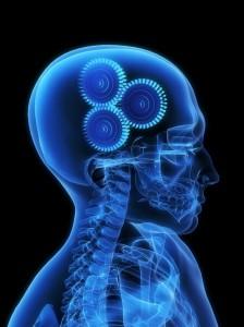 Les mécanismes du cerveau